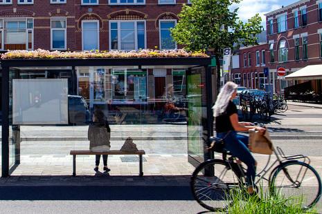 Las abejas desaparecen, y Holanda actúa: paradas de bus, refugio de insectos